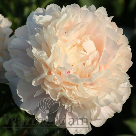how to make a peony support